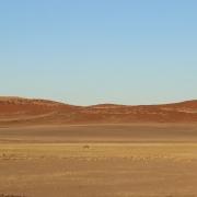 In den Namib-Naukluft-Nationalpark fährt nicht, wer unbedingt Tiere sehen will. Hier ist es so trocken, dass nur bestens angepasste Arten überleben - wie die Oryx-Antilope, deren Körpertemperatur auf bis zu 45°C ansteigen kann