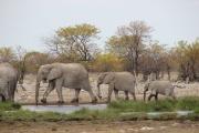 Eine große Elefantenfamilie beim Planschen zu beobachten, war eines der Highlights unseres Etosha-Besuchs