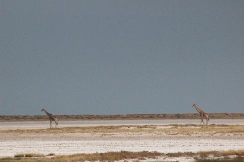 Endlose Weite: in die Salzpfanne wagen sich nur wenige Tiere