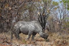 Und auch so ein Nashorn fällt im Vorbeifahren nicht unbedingt auf