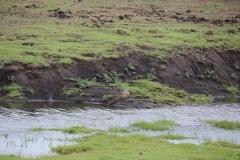 Gute Augen und ein Fernglas gehören zur Grundausstattung bei der Krokodilsuche.