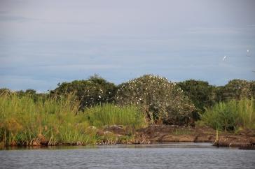 Hier am Chobe nisten auch viele Vögel