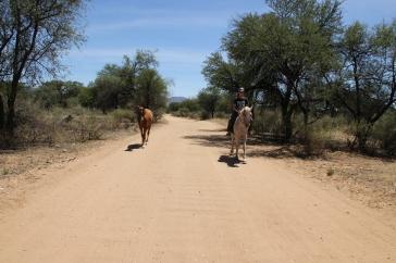 Keine Sorge, das Pferd links hat niemanden abgeworfen. Es ist noch nicht eingeritten, wollte aber auf keinen Fall alleine zurückbleiben.