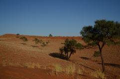 So sieht`s aus, im NamibRand Nature Reserve